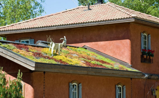 A statue of goat grazing on moss growing on a rooftop
